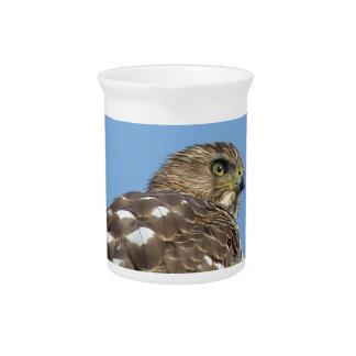 hawk pitcher
