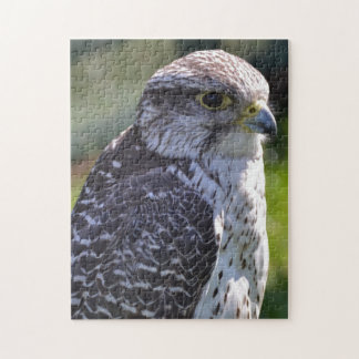 Hawk Puzzle/Jigsaw Jigsaw Puzzle