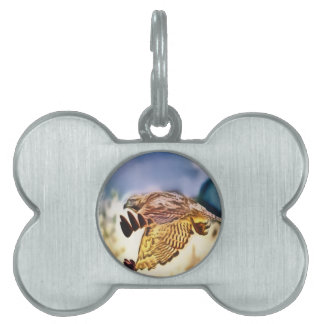 Hawk Spirit Pet ID Tag