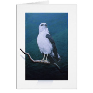 Hawk-White-necked Hawk Card
