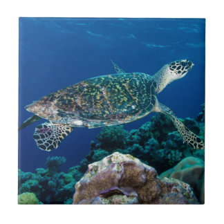 Hawksbill Sea Turtle Great Barrier Reef Coral Sea Ceramic Tile