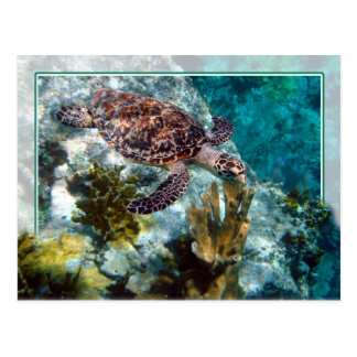 Hawksbill Sea Turtle, US Virgin Islands Postcard