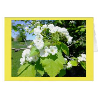 Hawthorn Flowers Blank Note Card