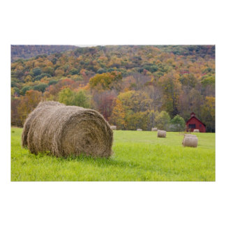 Hay bales and fall foliage on farm, poster