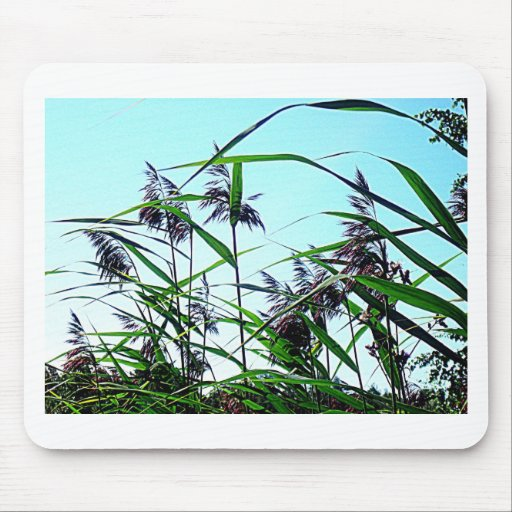 Hay in the summer mousepads