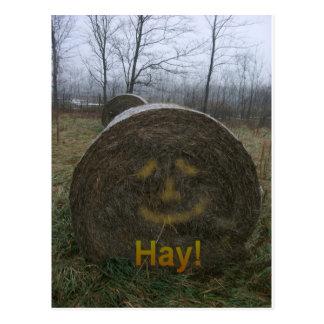 Hay! Postcard