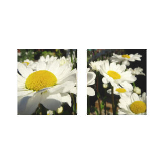 He Loves Me He Loves Me Not Daisy Canvas Set Canvas Print