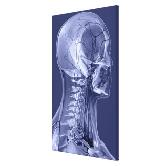 Head and Neck Blood Vessels Canvas Print