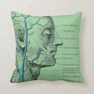 Head and veins - anatomy cushion