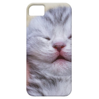 Head newborn silver tabby cat sleeping on hand barely there iPhone 5 case