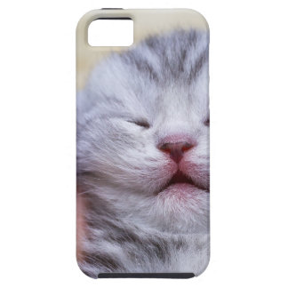 Head newborn silver tabby cat sleeping on hand iPhone 5 covers