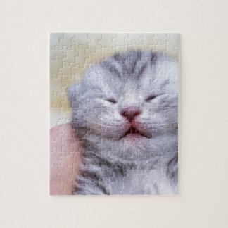 Head newborn silver tabby cat sleeping on hand jigsaw puzzle
