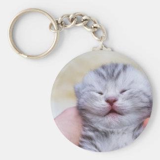 Head newborn silver tabby cat sleeping on hand key ring