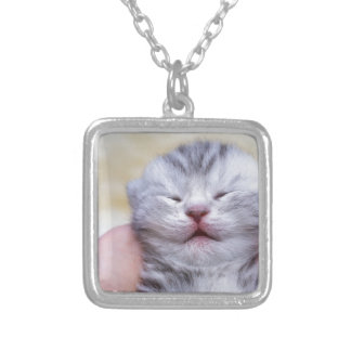 Head newborn silver tabby cat sleeping on hand silver plated necklace