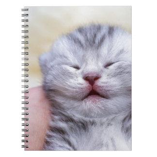 Head newborn silver tabby cat sleeping on hand spiral notebook