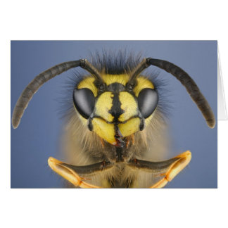 Head of a Common Wasp Card