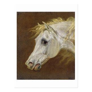 Head of a Grey Arabian Horse (oil on canvas on pan Postcard
