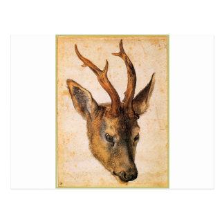 Head of a Stag by Albrecht Durer Postcard