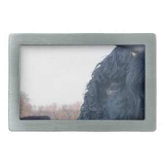 Head of black bull scottish highlander with cow belt buckles