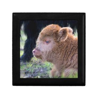 Head of Brown newborn scottish highlander calf Gift Box