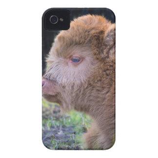 Head of Brown newborn scottish highlander calf iPhone 4 Case-Mate Case
