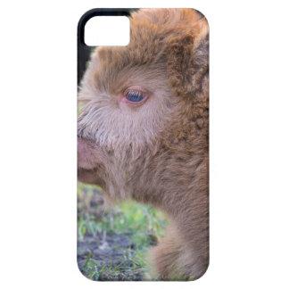 Head of Brown newborn scottish highlander calf iPhone 5 Cover