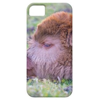 Head of brown newborn scottish highlander calf iPhone 5 covers