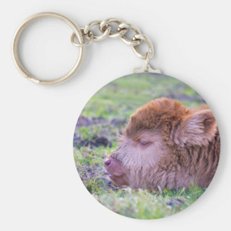 Head of brown newborn scottish highlander calf key ring