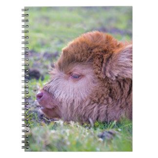 Head of brown newborn scottish highlander calf spiral notebook