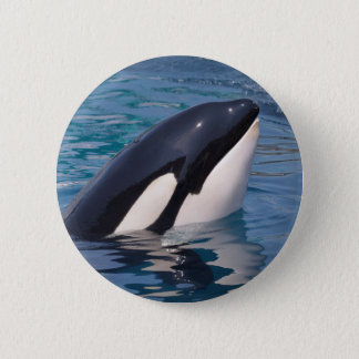 Head of killer whale 6 cm round badge