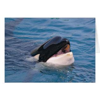 Head of killer whale card