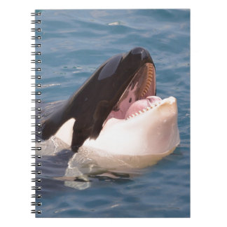 Head of killer whale notebooks