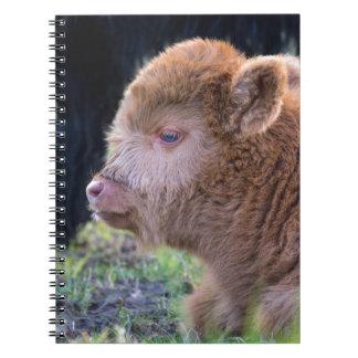 Head of lying Brown newborn scottish highlander Notebooks