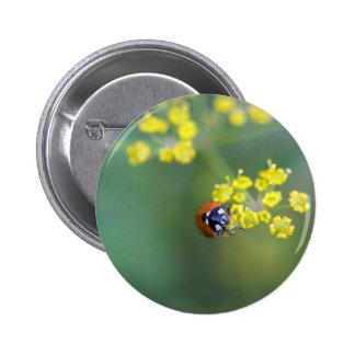 head on ladybug pin