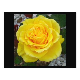 Head On View Of A Yellow Rose With Garden Backgrou 11 Cm X 14 Cm Invitation Card