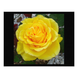 Head On View Of A Yellow Rose With Garden Backgrou Custom Announcement