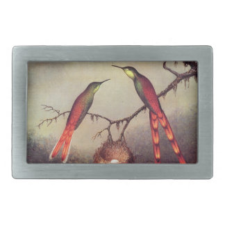 Heade Sword Tailed Hummingbirds Nest Belt Buckle