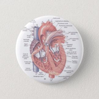 Heart Anatomy 6 Cm Round Badge