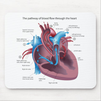 Heart Anatomy Mousepad