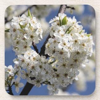 Heart Flowering Tree Beverage Coaster