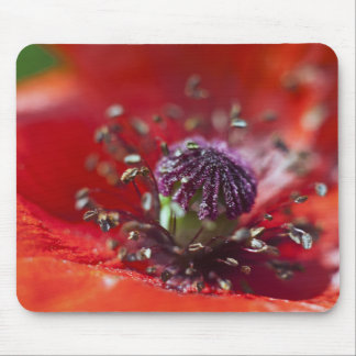 Heart of a Poppy Mouse Pad