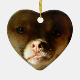 Heart Ornament with a Chihuahua Pomeranian mix