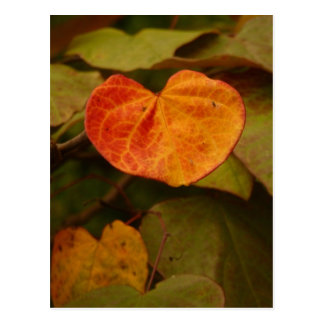 Heart Shaped Autumn Leaf Postcard