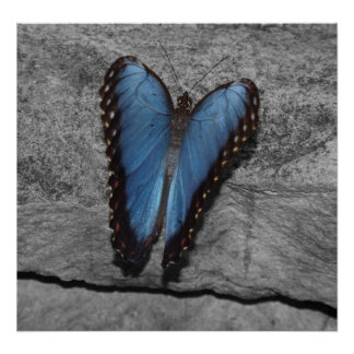 Heart Shaped Butterfly Poster