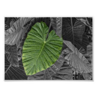 Heart Shaped Green Leaf Photographic Print