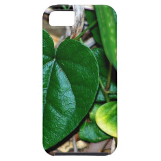 Heart Shaped Leaves Vine iPhone 5 Cases