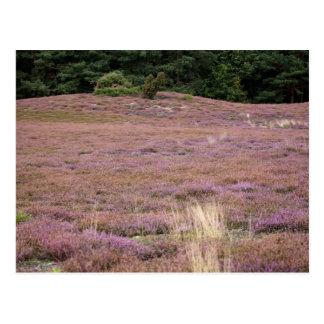 Heath Postcard