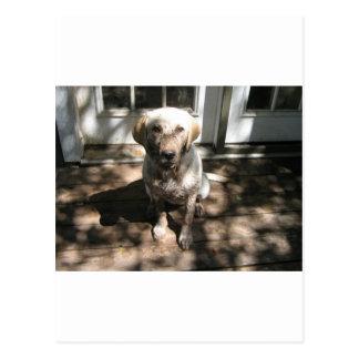 Heaven s Leash - Dirty Dog line Postcard