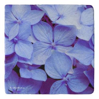Heavenly Baby Blue Hydrangeas Trivet