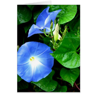 Heavenly Blue Morning Glory Birthday Card